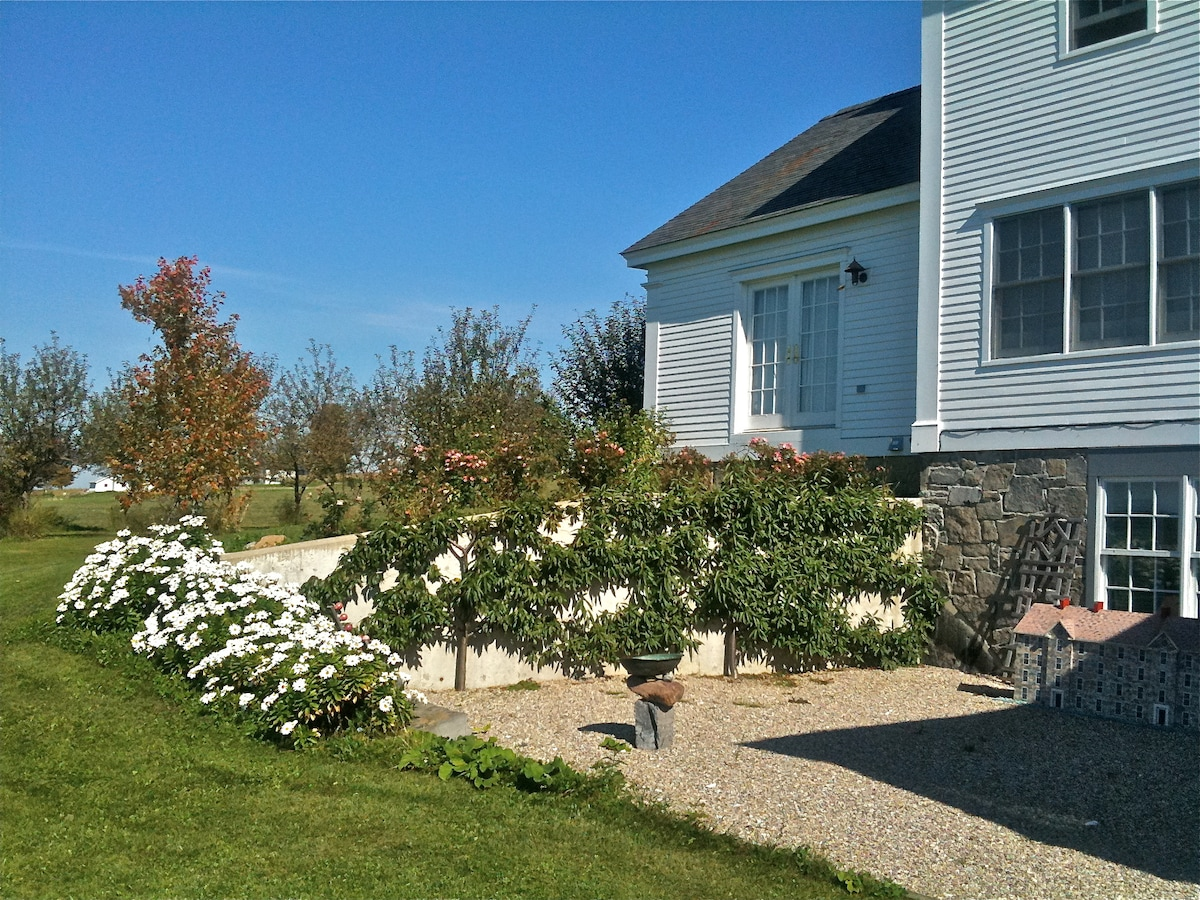 Inside patio with peach fruit espalier and Montauk daisies