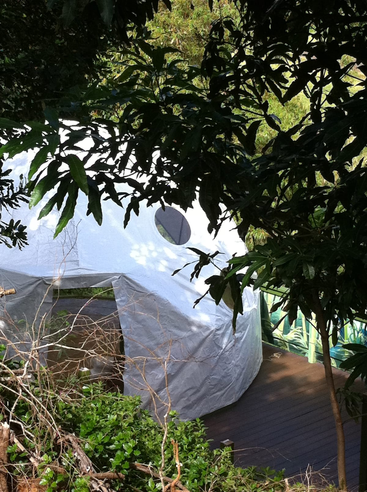 Walk down the stairs to find the Dome Hiding under a Mango Tree.