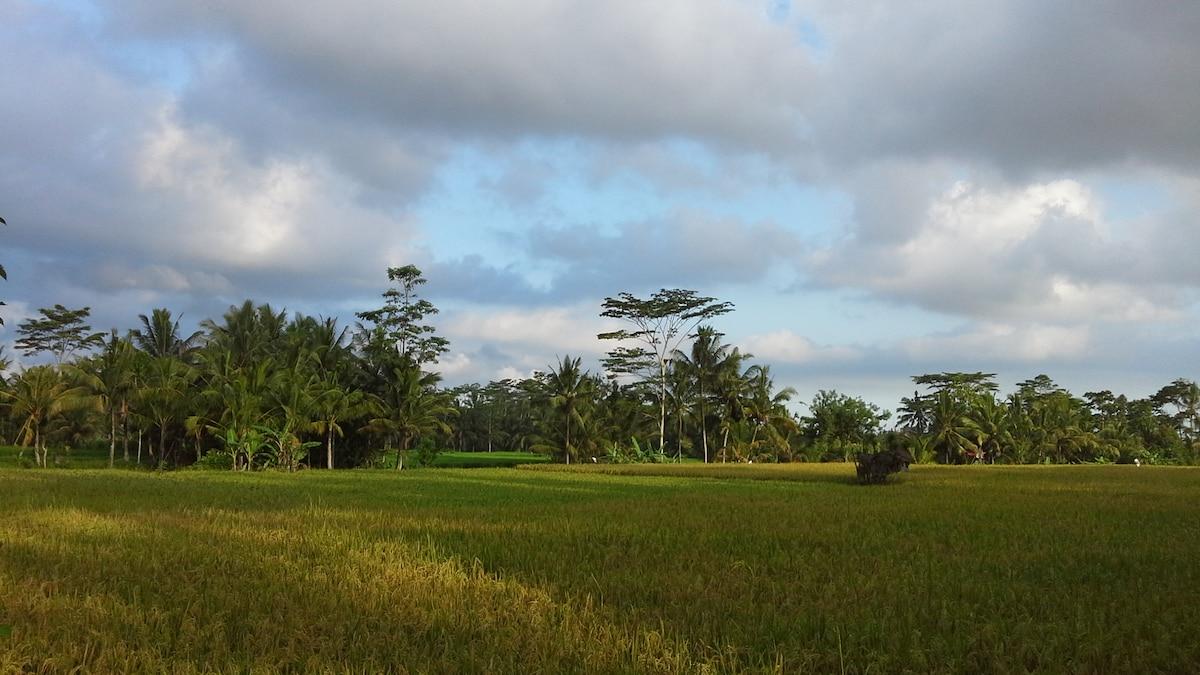 Villa Santun - Deluxe Ricefield