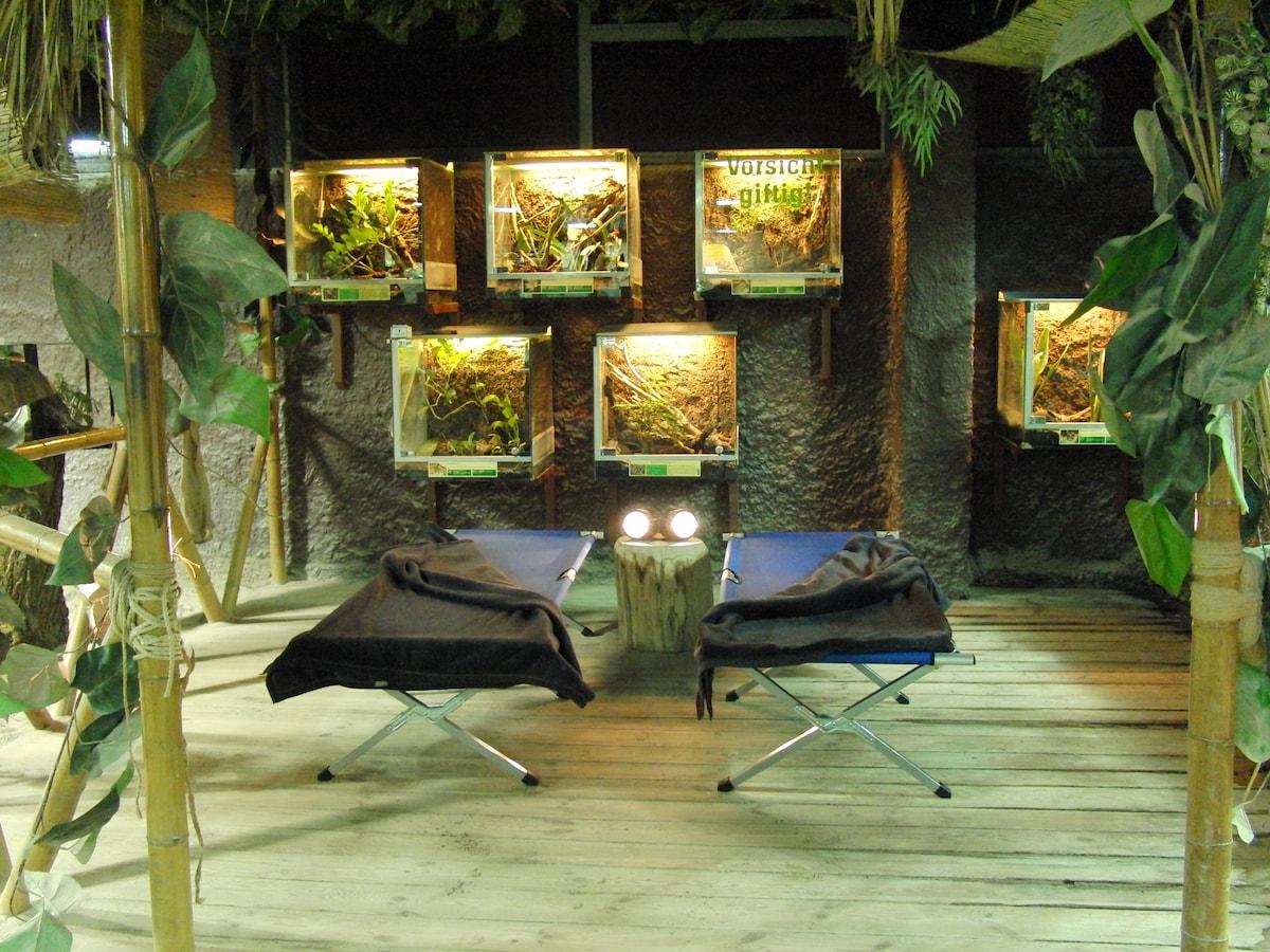 Jungle Book Slaapkamer : Jungle night in Reptilium / Landau in Landau ...