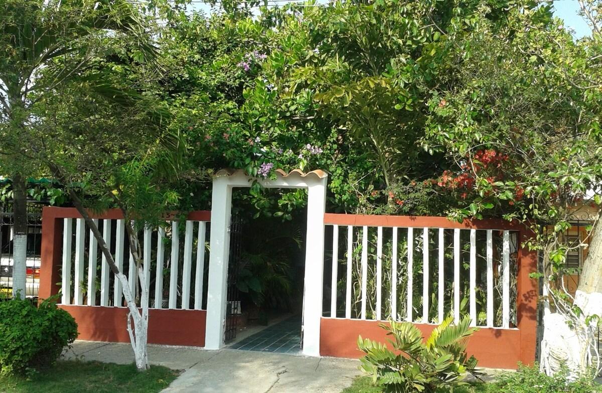 Entrance to house with exuberant tropical garden - cashew tree, bougainvillea, etc.