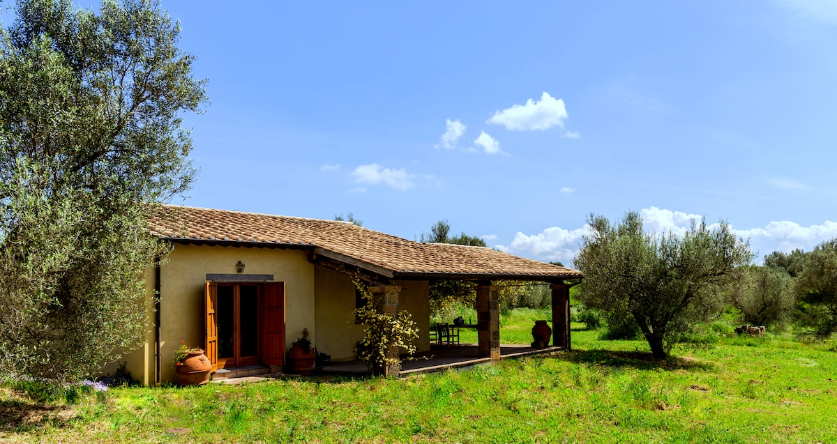 Incredible Organic Olive Farm