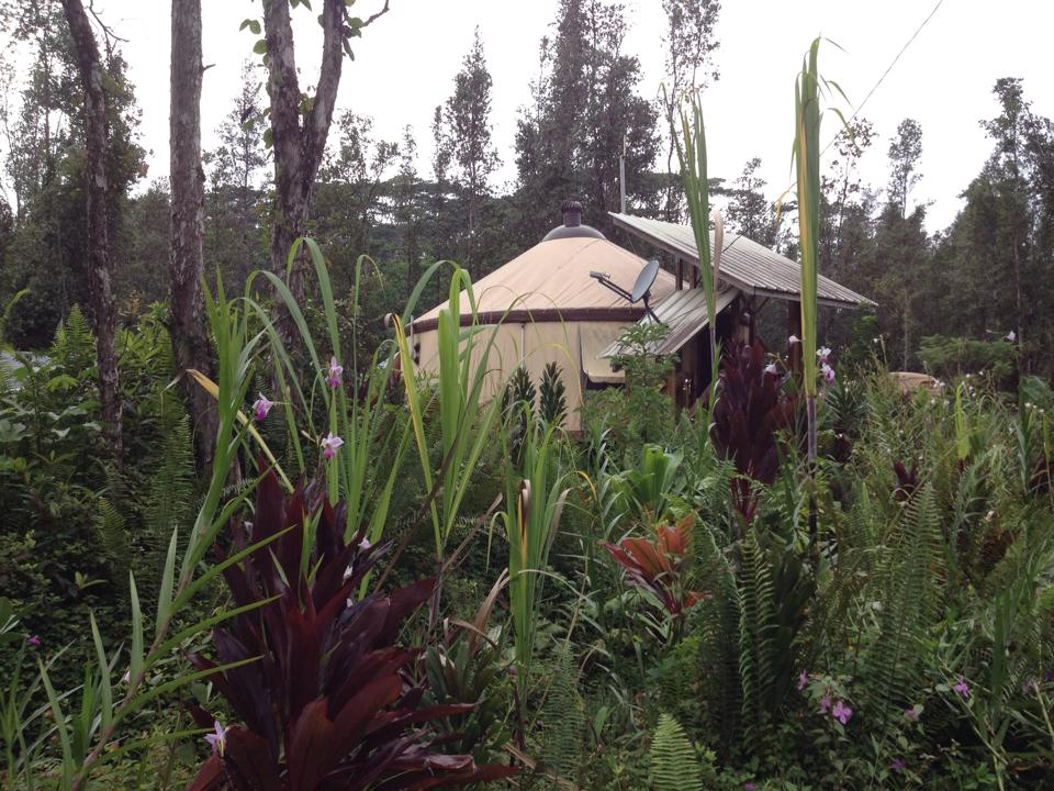 Lush gardening surrounds yurt.