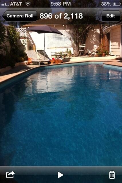 Bijou pool house in Santa Monica