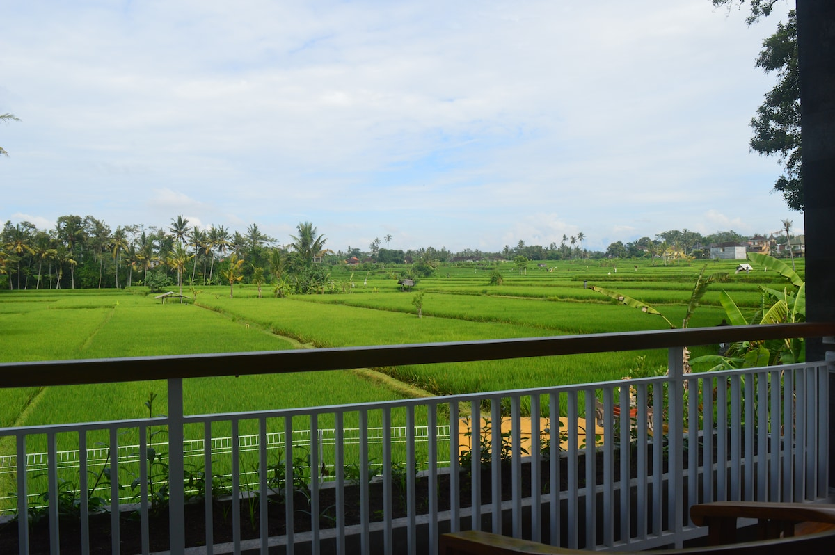 king studio in the rice field