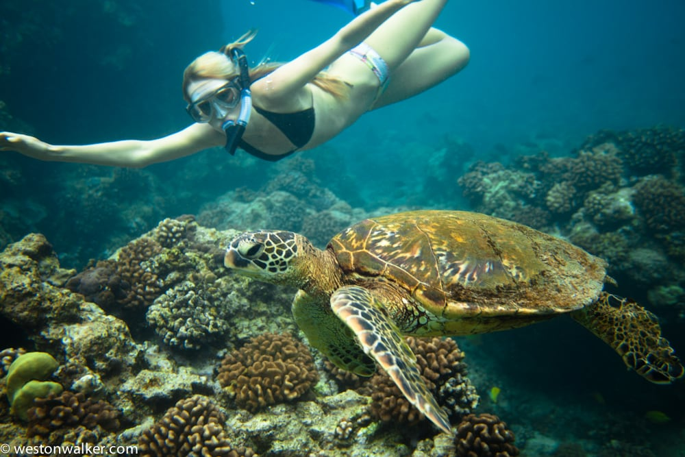 Oceanfront Home-SWIM WITH TURTLES!