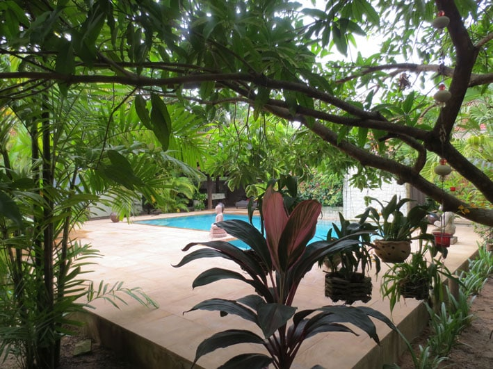 The pool in a lush tropical garden
