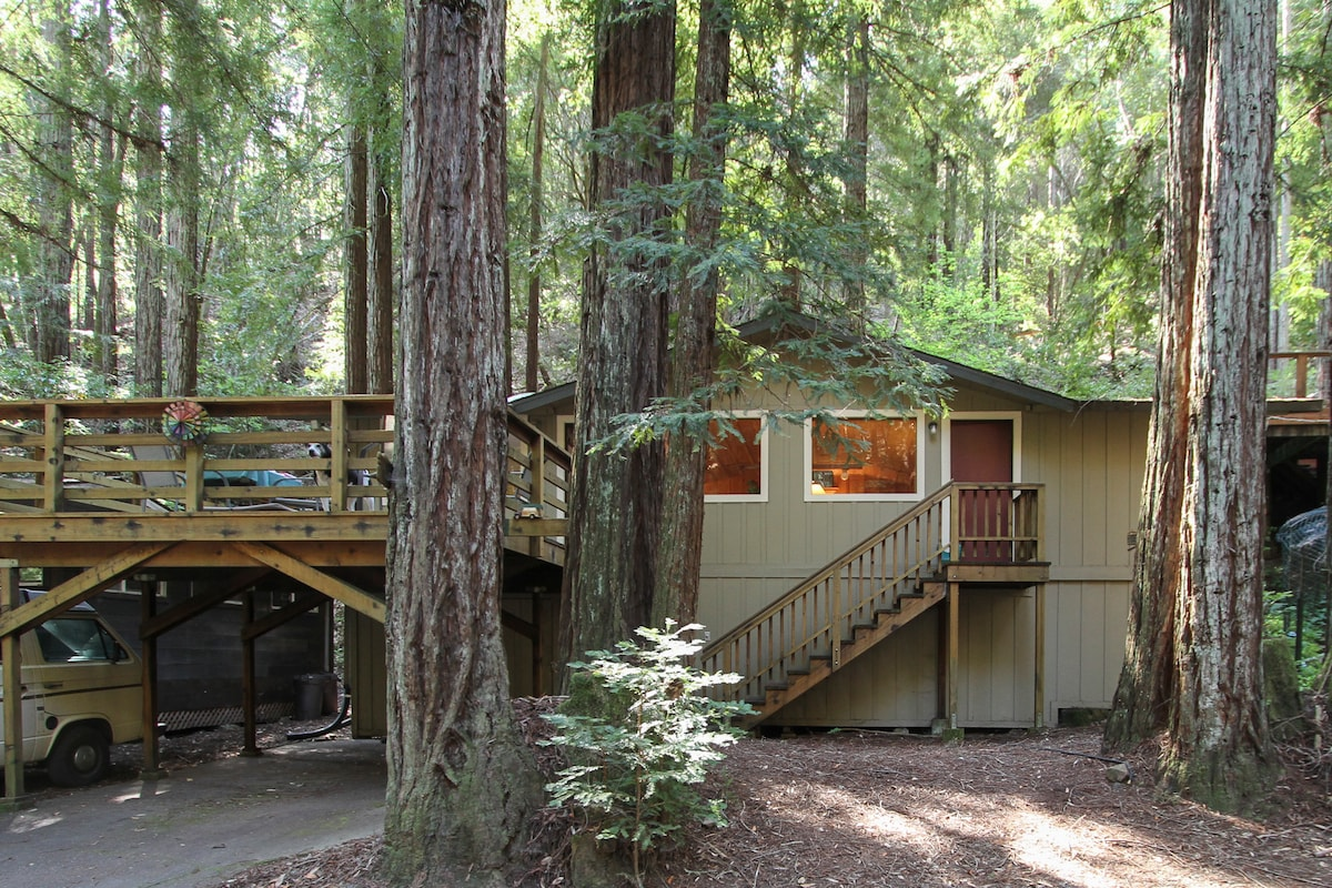 Country Comfort in Redwood Forest