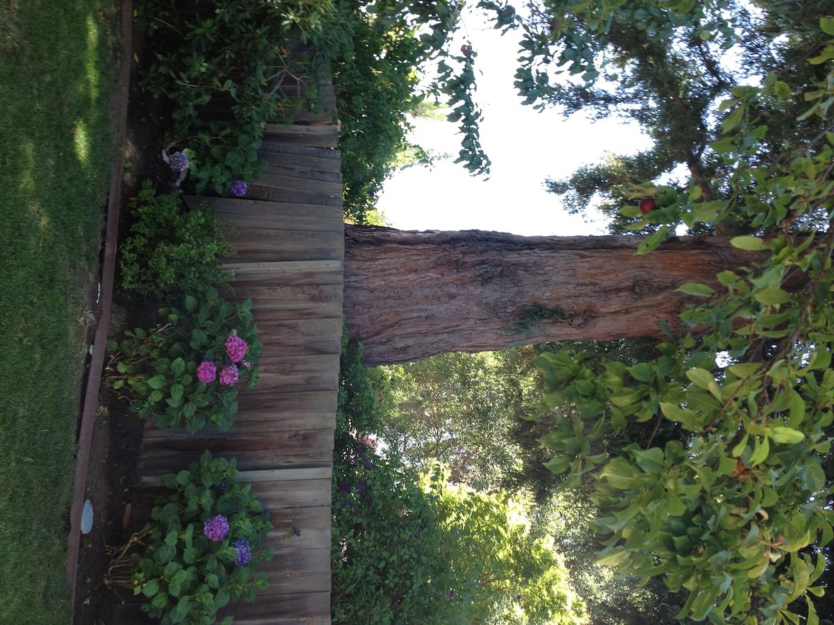 Redwood tree and hydraengas