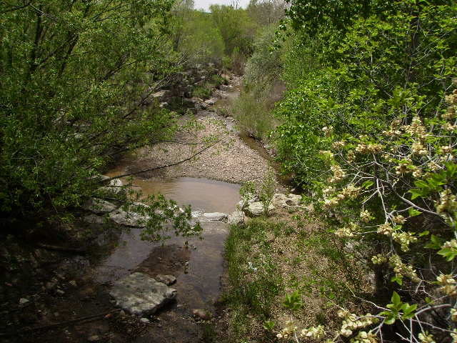 The Santa Fe River Arroyo is a one minute walk from the house. You can walk along for miles and it is gorgeous.