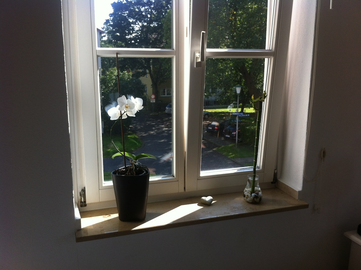 View out of the window across the bed - summer