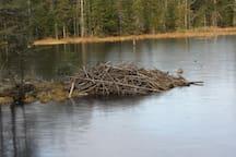 Beaver Pond on bnb trails