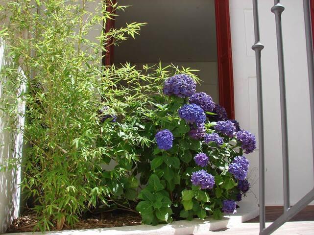 Bambous et hortensias
