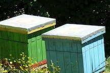 Nasze pszczółki