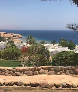 Dreaming Sharm...365!