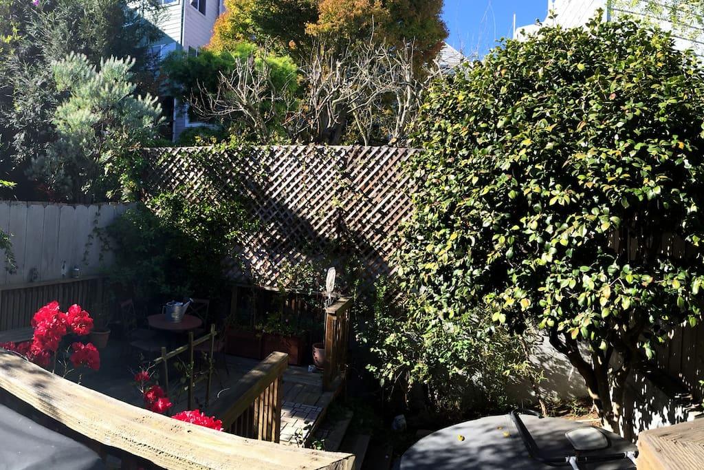 The sunny backyard.