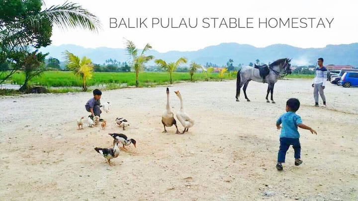 Balik Pulau Stable Homestay