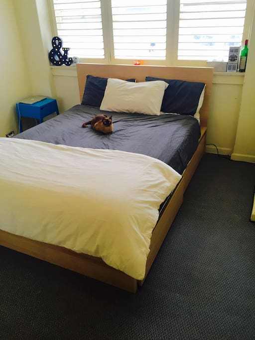 Your sunny master bedroom with super-comfortable queen mattress, timber bed, plush duvets and pillows, huge windows. Now with bonus cat