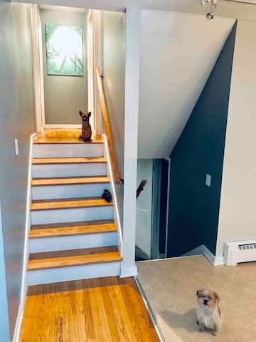 Six steps up to bedrooms and bathroom. Six steps down to family room laundryroom and bathroom.  Sorry our little girls will not be there to greet you, but they do live there on the off season.