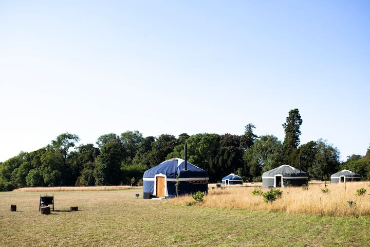 Shepherd's Purse, Wild Meadow Raynham