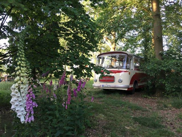 Zauberhafter Oldtimerbus im Grünen - Lengerich - Bobil