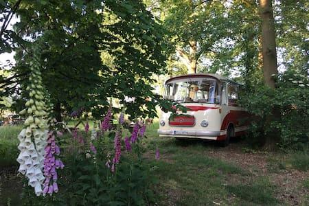 Zauberhafter Oldtimerbus im Grünen - Lengerich - Camper/RV