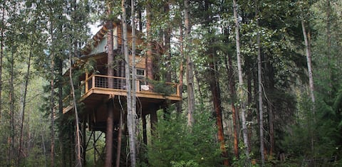 Creekside tree house nestled in an interior forest