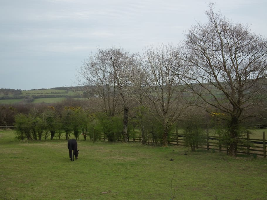 We are surrounded by countryside. Ask us if you'd like to meet the horses, dogs , Harriet the cat or poultry