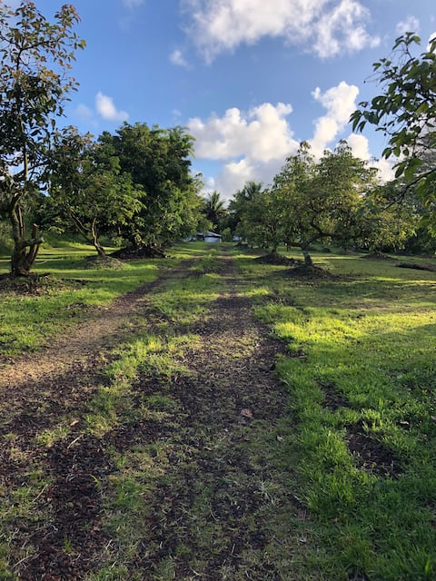 Avocado Acre (No smoking on this property)