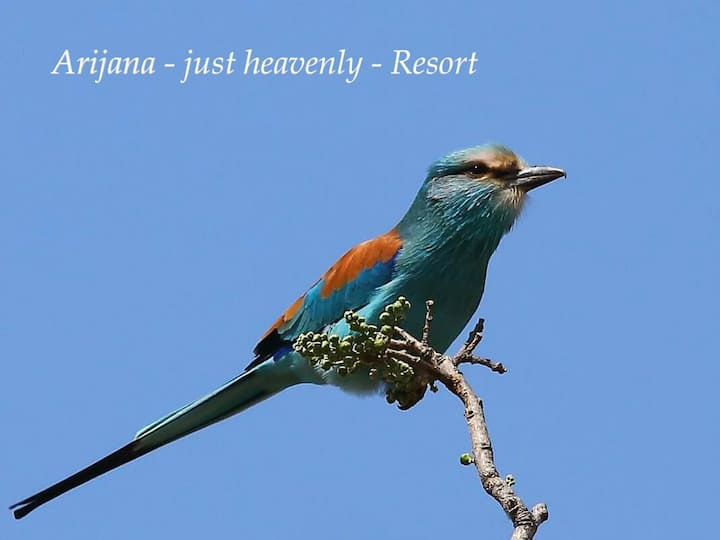 Arijana - just heavenly - Resort