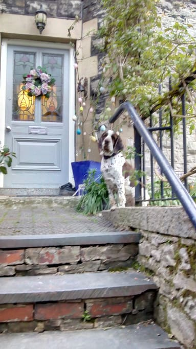 Doorstep and front of the house, including Juno.