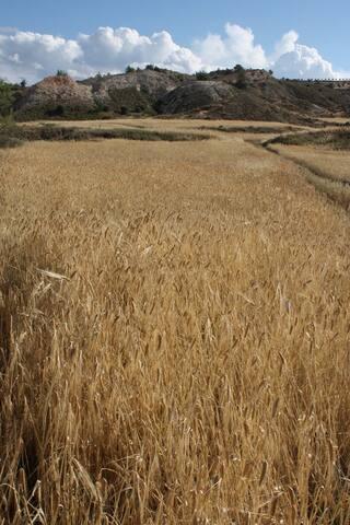 Pera Countryside