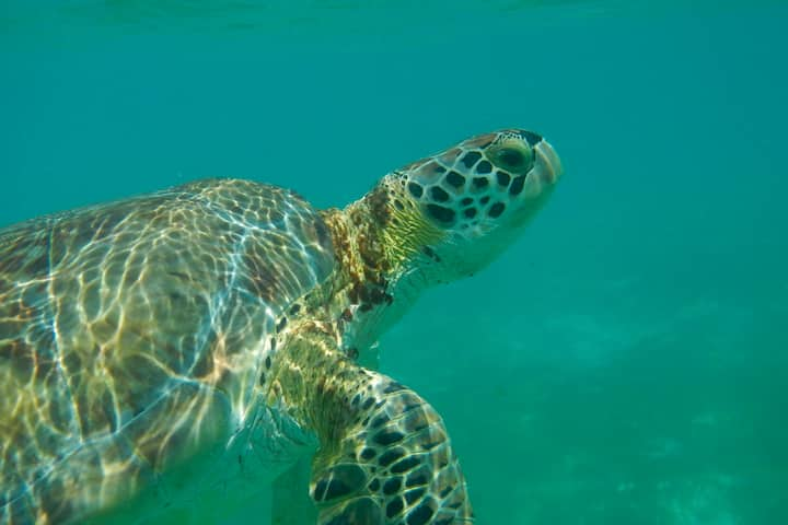 Enjoy Snorkeling in Amazing Akumal - AC, WIFI - CN