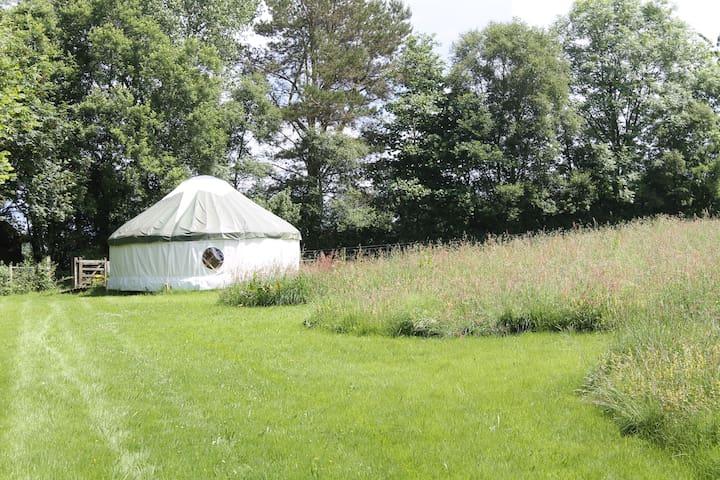 Denmark Farm Glamping Yurt - Lampeter - Yurt