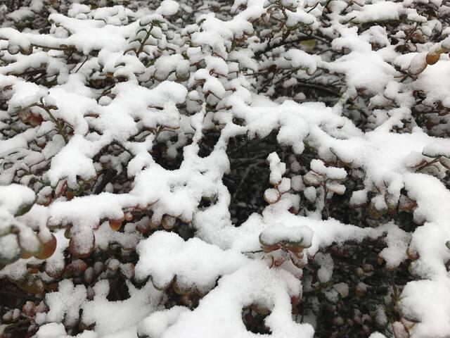 初雪带寒风