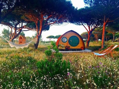 Peaceful, romantic wooden pod on beautiful coast
