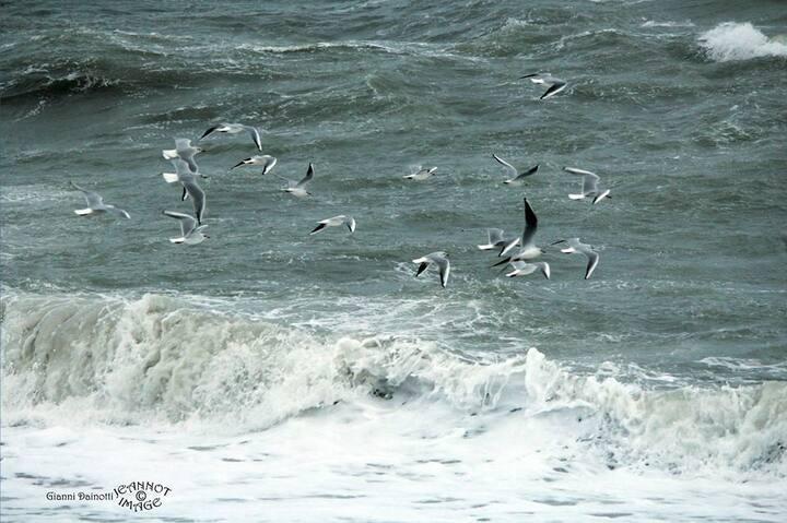 Grazioso monolocale vicino al mare  00800-LT0262