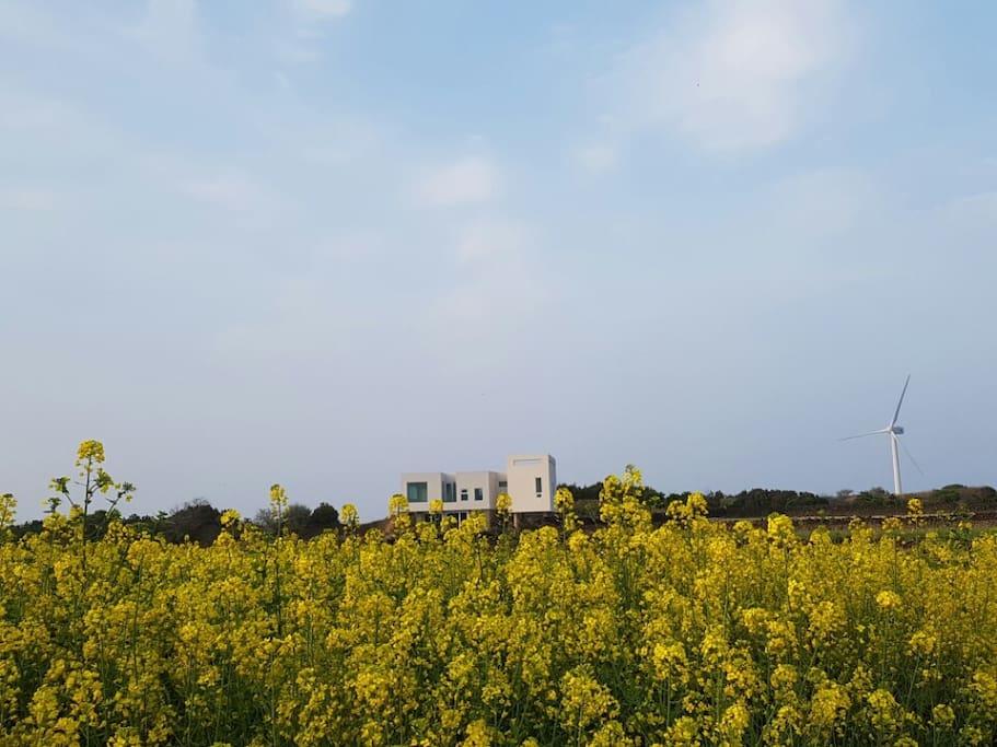 Jeju Palmhouse 제주팜하우스