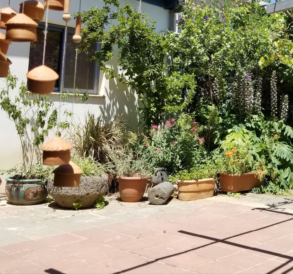 Our beautiful courtyard.