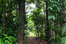 Wander through our garden paths and listen to the natural orchestra of the rain forest