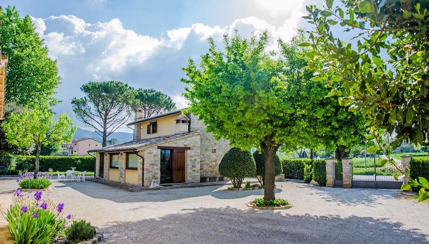 La Casa dell'Olmo - Assisi