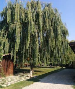 Oasi nel verde tra Modena e Carpi - Apartment