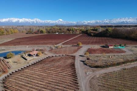 Cabaña del Alto Tupungato Mendoza  casa chardonnay