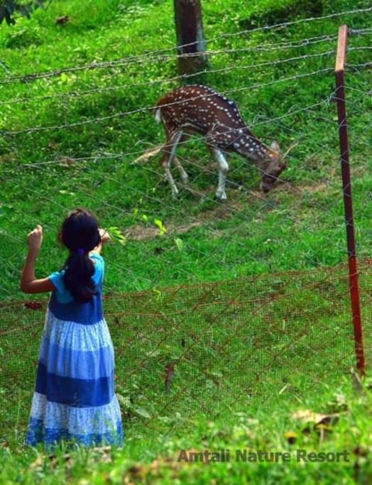 We have a nice deer enclosure along with rabbits, goats, chicken, and duck farm