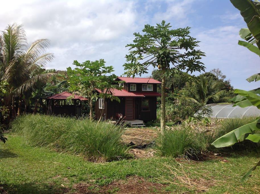 cottage across turmeric field.