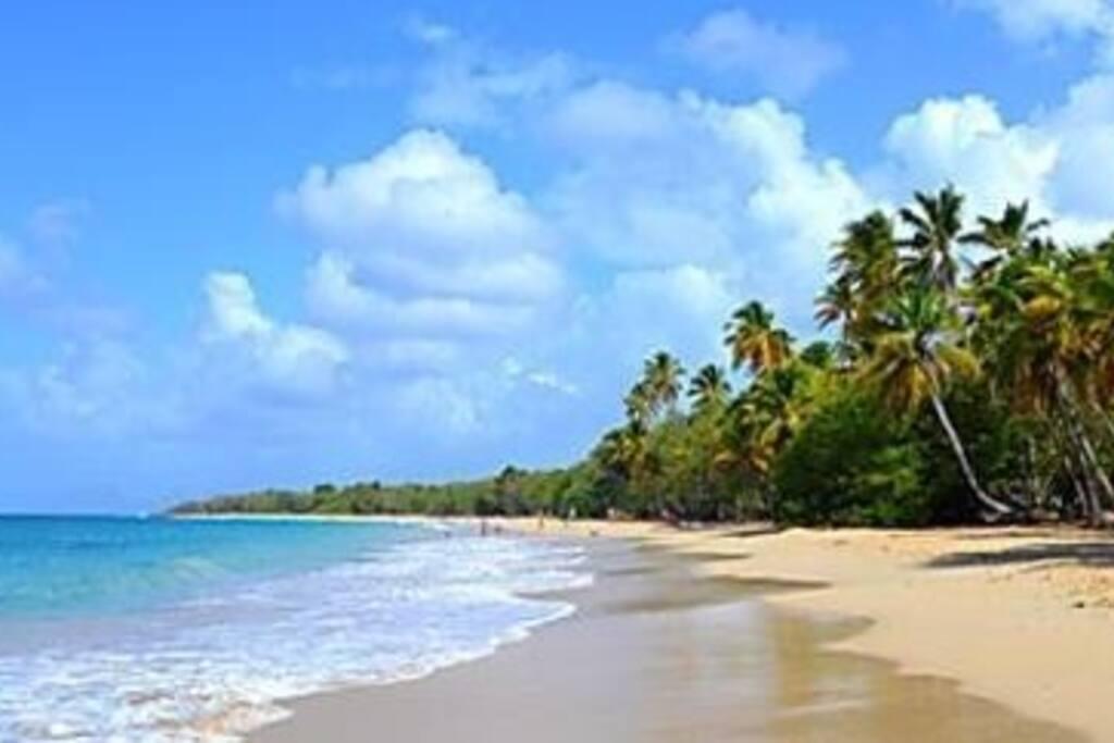 Grandes ballades sur les plages désertes