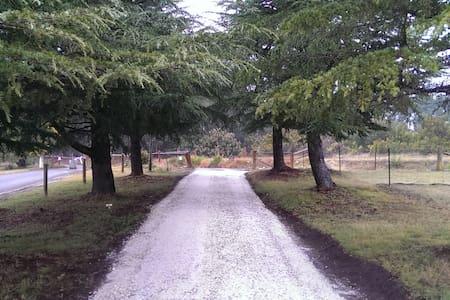 Morton Park Farmstay on 130 acres - Canyonleigh - Bungalow