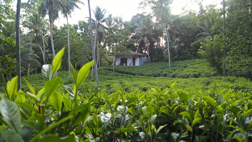 Chalet with Tea Estate View