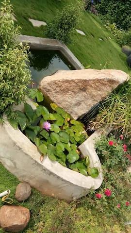 Lotus and fish pond