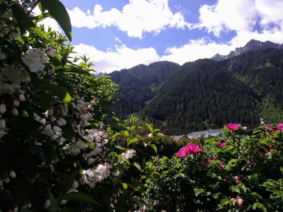 Big alpine garden BBQ Sunbath Relax!